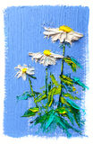 Oil painting Daisy flowers Royalty Free Stock Photos