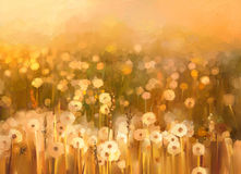 Oil painting of flowers plant. Dandelion flower in fields. Meadow landscape with wildflower. Oil painting dandelion flowers field.Flowers in soft yellow brown Stock Images