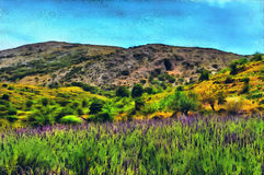 Oil painting lavender blooming in the mountains. Oil painting purple lavender blooming in the mountains Stock Photos