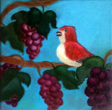 A little red bird on grape vine brach with grape fruits Royalty Free Stock Photos