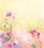 Oil painting nature grass flowers. Hand paint close up pink cosmos flower, pastel floral and shallow depth of field. Blurred nature background.Spring flowers Stock Photos