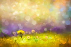 Oil painting nature grass flowers- yellow dandelions. Oil painting nature grass flowers. Hand paint close up yellow dandelions, pastel floral and shallow depth Stock Image