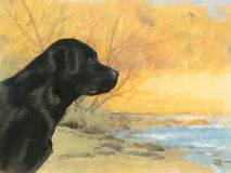 Oil painting portrait of black labrador in autumn Stock Photography