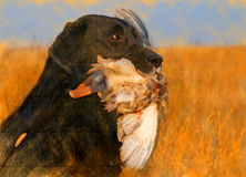 Oil painting portrait of black labrador with duck Stock Photo