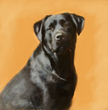 Oil painting portrait of black labrador male Royalty Free Stock Image