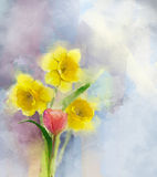 Oil painting red tulip and yellow daffodils flowers. In soft colour. Water color texture on grunge paper background background Royalty Free Stock Photography