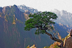 Oil painting stylized photo of yellow mountains, china. Photo of a single pine growing from the rock in the background of Huangshan (Yellow Mountains) in China Stock Images