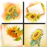 Oil painting. Sunflower Royalty Free Stock Images
