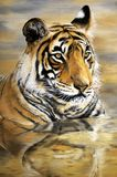 Oil painting of Tiger on canvas. Original painting of Potrait of a Tiger Ranthambore, India. Oiil painting on large canvas royalty free illustration
