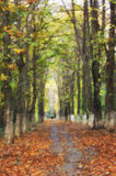 Oil painting with trees alley. And autumn leaves Royalty Free Stock Photo