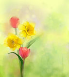 Oil painting tulip and daffodils flowers in soft color Stock Images