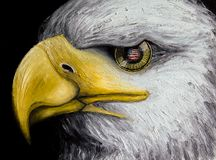 Oil painting of a white-headed eagle with the American flag reflected in its golden eye, isolated on black background, holidays. Oil painting of closeup of wild