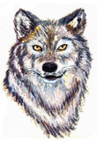 Oil painting wolf head. On paper Stock Image