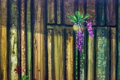 Oil painting wood wall and orchid flower. In daylight the morning. Hand painted, background, beauty ,illustration, copy space decoration Stock Photo