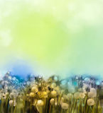Oil paintings white dandelion flower in the meadows. Royalty Free Stock Photography