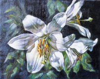 Oil paints on canvas of a white flower stock illustration