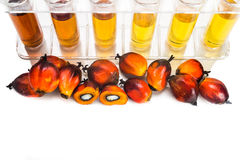 Oil palm biofuel biodiesel with test tubes on white background. Stock Images
