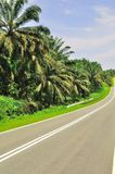 Oil Palm Estate 2 Royalty Free Stock Images