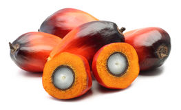 Oil palm fruit Royalty Free Stock Photo