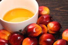 Oil palm fruit and cooking oil Stock Image