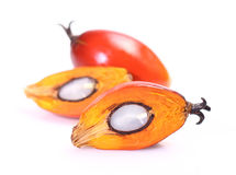 Oil palm fruit Stock Photo