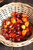 Oil palm fruit Royalty Free Stock Images