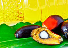 Oil palm fruit and palm olein oil Stock Photography
