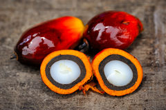 Oil palm fruits Royalty Free Stock Image