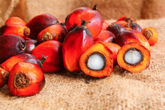 Oil Palm Fruits with cut fruit Royalty Free Stock Photos