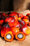 Oil Palm Fruits with cut fruit Royalty Free Stock Photo