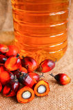 Oil palm fruits with palm oil Stock Photography