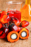 Oil palm fruits with palm oil Stock Images