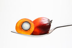 Oil palm fruits on spoon Royalty Free Stock Images