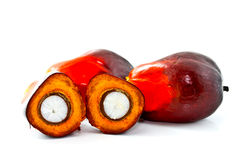 Oil palm fruits on white background Royalty Free Stock Photo