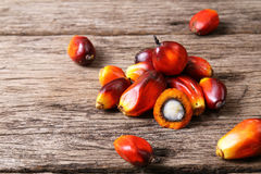 Oil palm fruits Stock Photography