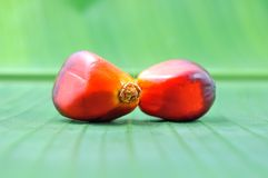 Oil palm Stock Image