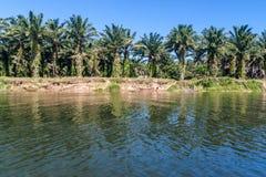 Oil palm plantation Stock Images
