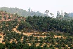 Oil palm plantation - Series 4 Royalty Free Stock Photos