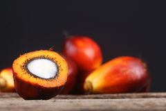 Oil palm seed closeup - Series 3 stock image