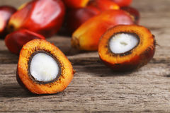 Oil palm seed closeup - Series 4 Royalty Free Stock Images