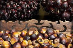 Oil palm seeds Stock Image