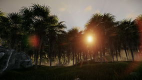 Oil Palm Tree Plantation against beautiful sunrise. Hd video stock video