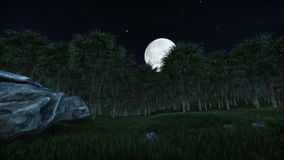 Oil Palm Tree Plantation against full moon. Hd video stock footage