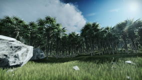 Oil Palm Tree Plantation against timelapse clouds. Hd video stock video footage