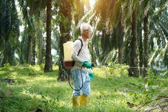 Oil palm worker spraying herbicides. At plantation royalty free stock image