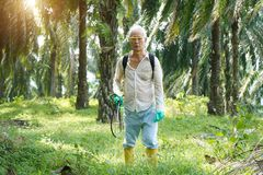 Oil palm worker spraying herbicides. At plantation royalty free stock photos