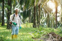 Oil palm worker spraying herbicides. At plantation stock photo