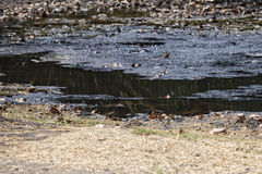 Oil petroleum pit. Close up detail royalty free stock images