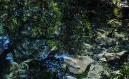 Oil Picture. Oil Draw, Reflection.  Green Trees In The Water Royalty Free Stock Images
