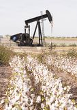 Texas Cotton Filed Textile Agriculture Oil Industry PumpJack. Oil production via fracking in a mature cotton field West Texas stock photo